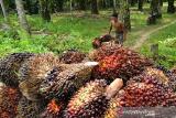 GAPKI: Ekspor produk minyak sawit melonjak sepanjang Agustus