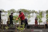Presiden Joko Widodo tanam mangrove di pulau terdepan Bengkalis