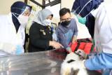 Pemkab Sleman menyelenggarakan vaksinasi rabies gratis