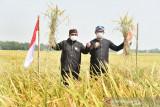 Ketua Majelis Syura PKS menekankan pentingnya regenerasi petani milenial