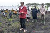 Presiden Joko Widodo Menanam Mangrove