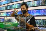 Pekerja membuat aquascape di gerai Aquazone, Malang, Jawa Timur, Selasa (28/9/2021). Pengusaha ikan hias dan aquascape setempat berupaya meningkatkan penjualan dengan memberikan edukasi tentang pemeliharaan ikan hias bagi pemula, memproduksi pernik-pernik akuarium, menggenjot pemasaran di pasar digital. Antara Jatim/Ari Bowo Sucipto/zk.