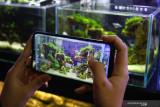 Pekerja memotret aquascape untuk diunggah di pasar digital di gerai Aquazone, Malang, Jawa Timur, Selasa (28/9/2021). Pengusaha ikan hias dan aquascape setempat berupaya meningkatkan penjualan dengan memberikan edukasi tentang pemeliharaan ikan hias bagi pemula, memproduksi pernik-pernik akuarium, menggenjot pemasaran di pasar digital. Antara Jatim/Ari Bowo Sucipto/zk.