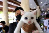 Warga menunjukkan kucing miliknya usai disuntik vaksin rabies di Pendopo Indramayu, Jawa Barat, Selasa (28/9/2021). Pemerintah setempat bersama dengan Dinas Peternakan dan Kesehatan Hewan mengadakan vaksinasi rabies gratis untuk mencegah adanya penyakit rabies pada hewan peliharaan dalam rangka memperingati World Rabies Day. ANTARA FOTO/Dedhez Anggara/agr