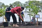 Presiden Joko Widodo (kanan) didampingi Menteri Lingkungan Hidup dan Kehutanan Siti Nurbaya melakukan penanaman mangrove di kawasan wisata Raja Kecik, Desa Muntai Barat, Kecamatan Bantan, Kabupaten Bengkalis, Riau, Selasa (28/9/2021). ANTARA FOTO/Alfisnardo/foc.