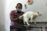 Boyolali peringati Hari Rabies melalui vaksinasi hewan gratis