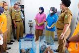 Sumsel cegah penyebaran rabies melalui vaksinasi hewan