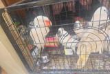 Ditreskrimsus Polda Sumsel gagalkan penyelundupan 118 hewan dilindungi, diduga akan dikirim ke Thailand