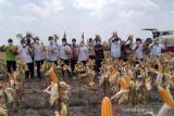 Mentan SYL pastikan stok jagung di dalam negeri aman