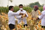 Mentan panen jagung di Grobogan di tengah pasokan yang melimpah