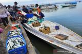 Ikan segar d kota Kendari mulai ramai namun harga masih tinggi