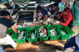 Natuna bakal jadi  lumbung ikan nasional