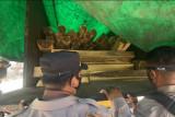 Polsek Pelabuhan Poto Tano amankan belasan kubik kayu ilegal