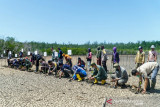 Dirjen KLHK rehabilitasi mangrove di kawasan Taman Nasional RAW Konsel