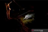 Warga bersiap menguburkan seekor lumba-lumba bungkuk (Sousa chinensis) yang mati terdampar di Pantai Pasir Jambak, Padang, Sumatera Barat, Sabtu (2/10/2021). Lumba-lumba sepanjang 2,2 meter tersebut ditemukan mati terdampar sejak Sabtu (2/1/2021) sore, dan warga berinisiatif menguburkan di tepi pantai karena kondisinya sudah membusuk. ANTARA FOTO/Iggoy el Fitra/aww.