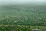 Kaka Slank lintasi hutan Papua dari udara