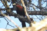 ProFauna temukan sembilan jenis burung dilindungi di hutan lindung RPH Sekar