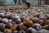 PT WRL bantu bibit kelapa unggul dukung perkebunan Tojo Una-Una