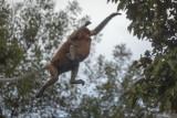 Pantau Gambut ajak jaga habitat satwa langka di Hari Binatang Sedunia