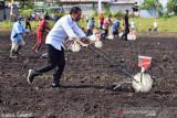 Presiden Jokowi: Sorong jadi daerah produsen utama pertanian