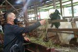 Perhatian pemerintah terhadap sektor peternakan di Seruyan dinilai belum optimal