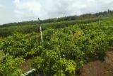 Pemkab Kulon Progo membantu irigasi springkle sembilan kelompok tani