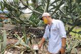 5.000 pohon di Kebun Raya Bogor ber-KTP
