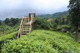 Wisatawan mengunjungi Wisata Agro Rengganis (WAR) Kebun Teh Gunung Gambir PTPN XII, Sumberbaru, Jember, Jawa Timur, Selasa (5/10/2021). Minat wisatawan berkunjung ke WAR Kebun Teh Gunung Gambir tinggi seiring dibukanya kebun teh itu menjadi destinasi wisata di Jember sejak tahun 2018. Antara Jatim/Seno/zk.