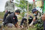 Koperasi Kopi Koerintji Barokah tanam 600 pohon peringati Hari Kopi Sedunia