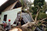 BMKG prakirakan angin kencang melanda sebagian wilayah Indonesia