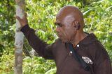 Peraih Kalpataru, Alex Waisimon menjaga cenderawasih dan hutan Papua lestari