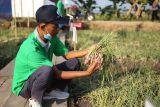 BI mendorong budidaya bawang merah di Sragen untuk tekan inflasi