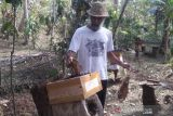 Permintaan madu lebah klanceng meningkat selama pandemi