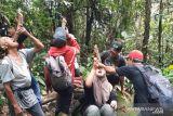 Selain di Kalimantan, obat kanker dan diabetes tersebut juga ditemukan di Bonjol Pasaman