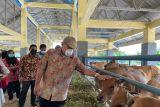 Pemkab Buol  terapkan metode inseminasi buatan genjot kualitas sapi