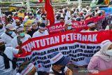 Peternak tagih janji Presiden Jokowi soal pengadaan 30 ribu ton jagung pakan