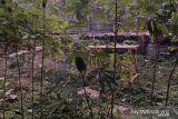 Gunung Kidul akan membangun sentra produksi patilo di Kawasan Krakal