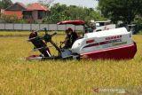 Produksi beras di Sukoharjo surplus 102.000 ton