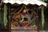 Seekor kera ekor panjang (Macaca fascicularis) mengambil buah-buahan dari gunungan yang dibuat oleh warga pada Festival Rewanda Bojana di Desa Ciakak, Wangon, Banyumas, Jateng, Rabu (13/10/2021). Festival Rewanda Bojana merupakan tradisi memberi makanan kepada kera liar oleh warga di sekitar desa Ciakak, Banyumas pada musim kemarau agar kera-kera tersebut tidak menjarah rumah warga akibat kekurangan makanan. ANTARA FOTO/Idhad Zakaria/nym.