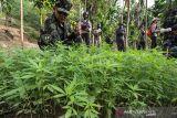 Penggerebekan Ladang Ganja BNN. Petugas Badan Narkotika Nasional RI dan petugas gabungan membakar batang pohon ganja siap panen saat penggerebekan ladang ganja di Dusun Cot Lawatu, Sawang, Kabupaten Aceh Utara, Aceh, Rabu (13/10/2021). Dalam penggerebekan yang dilakukan 103 personel BNN, TNI, Polisi itu ditemukan 5.000 lebih tanaman ganja atau setara 3 ton batang pohon ganja siap panen dan 20 ribu bibit siap tanam di tiga lokasi (3 hektare) yang kemudian dimusnahkan dengan cara dibakar di tempat. ANTARA FOTO/Rahmad