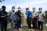 Enno, benih kacang panjang varietas unggul inovasi TeFa Polbangtan Kementan