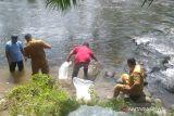 Selain restoking ikan endemik di Agam, ke sini legialator Sumbar alokasikan dana Pokir