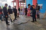Damkar Tanjungpinang 47 kali evakuasi ular dari pemukiman warga