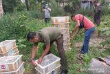 BB KSDA Riau amankan 840 burung ilegal lalu dilepasliarkan