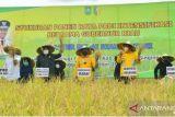 Gubri apresiasi petani Kuansing terapkan tiga kali musim tanam