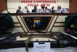 Polisi menunjukkan barang bukti dan tersangka saat ungkap kasus tindak pidana konservasi sumber daya alam hayati dan ekosistem di Polda Jawa Timur, Surabaya, Jawa Timur, Rabu (13/10/2021). Polda Jawa Timur menangkap dua tersangka atas kasus dugaan memperniagakan satwa-satwa dilindungi baik dalam keadaan hidup atau mati dan mengamankan sejumlah barang bukti satwa beberapa diantaranya kulit Macan Tutul (Panthera Pardus Melas), Lutung Jawa (Trachypithecus auratus) anakan, Binturong (Arctictis binturong) dan Landak Jawa (Hystrix javanica). Antara Jatim/Didik Suhartono/zk.