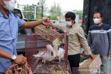 Kejari Dumai terima tersangka penyelundupan hewan