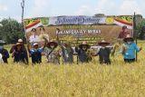 Bupati Bartim: Pembangunan sektor pertanian demi ketahanan pangan daerah