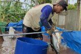 Minapolitan tingkatkan perkonomian masyarakat Lampung