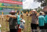 Lapas Terbuka Pasaman panen raya jagung dukung ketahanan pangan nasional